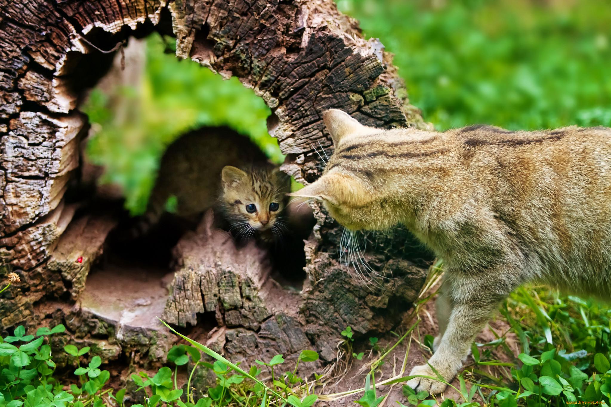 картинки животные прячутся кам фигурки